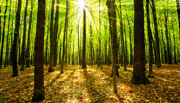 old-growth-forests-and-their-role-in-a-community